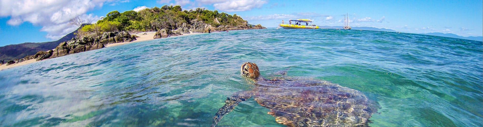 whitsunday island tours