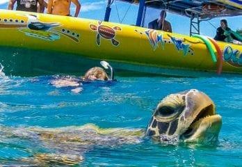 whitsundays snorkelling
